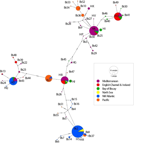 6-locations-median-joining-network-for-publication.jpg