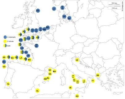 All Ciona Europe - All data